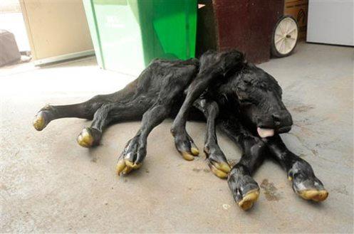 El animal instantes después de nacer.